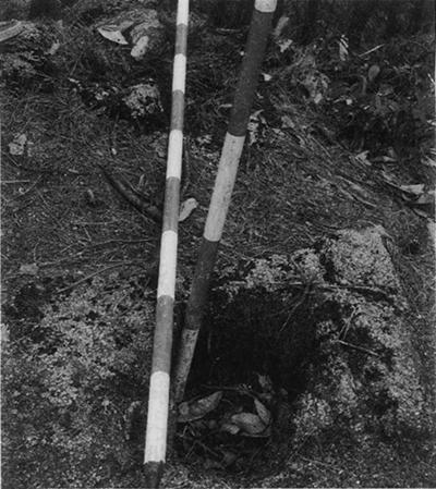 東方主郭に残る柱穴
